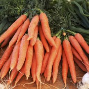 Antioxidantes y envejecimiento