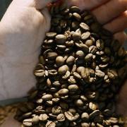 Café o chocolate de los cinco continentes