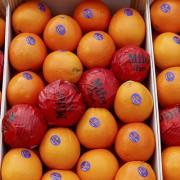 El misterio de la vitamina C