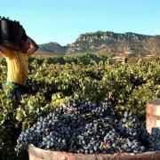 Haro, la Rioja Alta