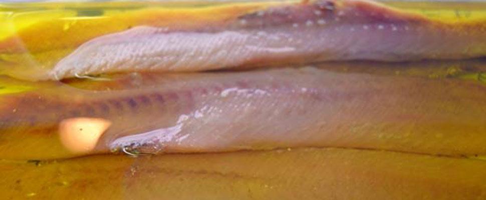 De anchoas por Cartagena