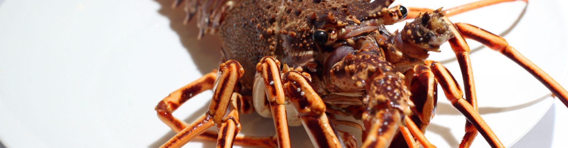 Cultura gastronómica| Langosta del Cantábrico