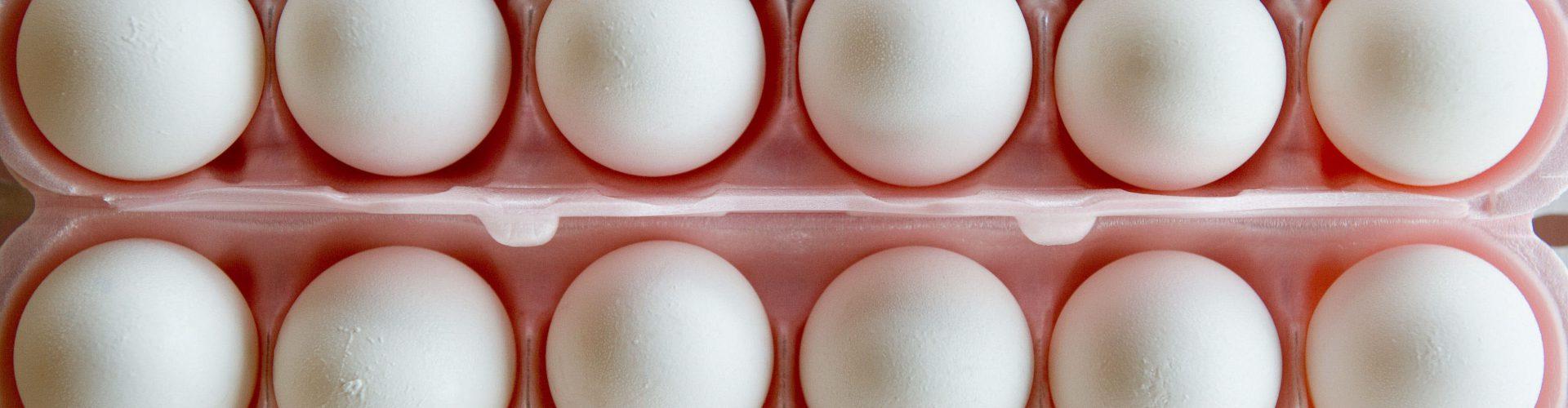 El mono obeso| Los huevos son para el verano