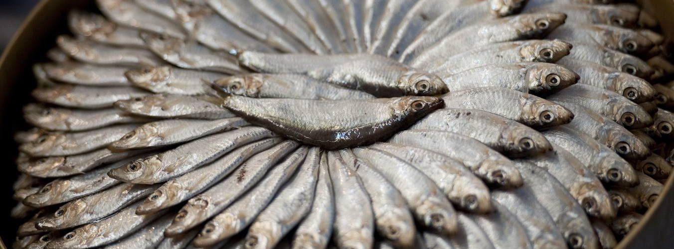 Cultura gastronómica| Sardinas o sardinonas