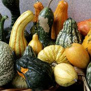 Cultura Gastronómica | Calabaza o calabacín
