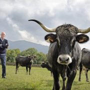 La tudanca y la carne con sello de calidad IGP de Cantabria, a debate